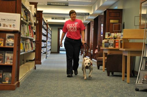 Wandering the library, looking for patrons who needed some pit bull love!