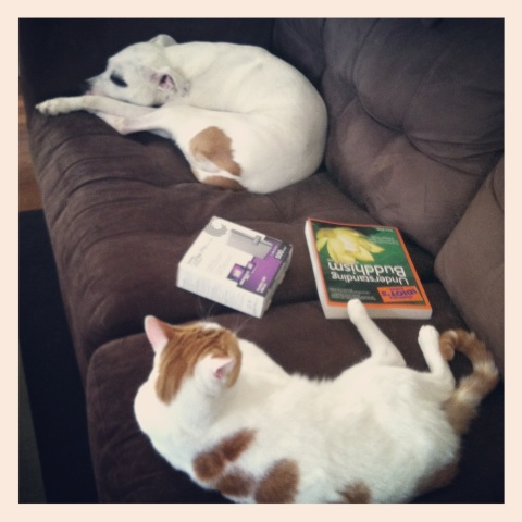Lounging together on a lazy Sunday afternoon.