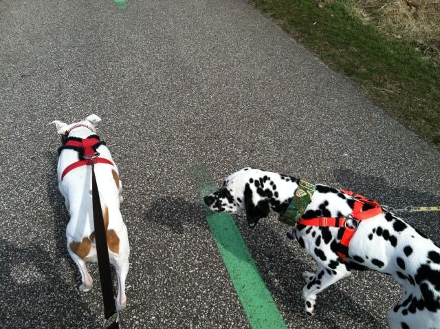 Ignoring our walking buddy!